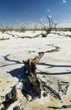 Salt Lakes and Dead Trees Stock Photos