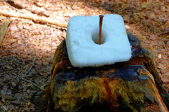 Deer salt lick. A salt lick fixed on a tree stump. Food for deer in German forest Stock Photography