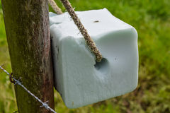 Salt lick stone. Tied on a fence for providing livestock with sodium chloride and extra minerals Stock Photography
