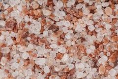 Salt makronärbild Royaltyfria Foton