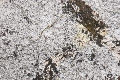 Salt marsch för naturtjeck arkivfoto