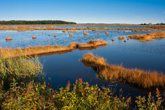 Salt marsh Stock Photography