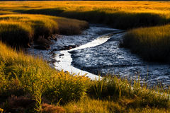 Salt Marsh Royalty Free Stock Images