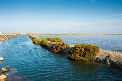 Salt marsh Stock Image