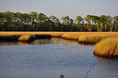 salt marsh Royaltyfria Foton