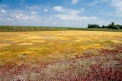 Salt marsh Stock Photography