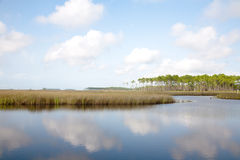 Salt Marsh And Long Leaf Pines Stock Photography