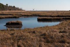 Salt Marsh with Bird's Nest in Background. Salt marshes with bird's nest in the background on a crisp Autmn day Royalty Free Stock Photography