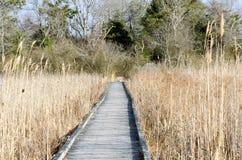 Salt Marsh Boardwalk Stock Images