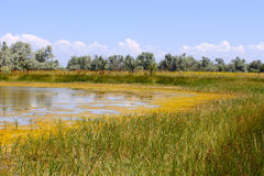 Salt marsh covered with water plants (I) Stock Images