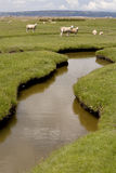 Salt Marsh Fields. Royalty Free Stock Photography