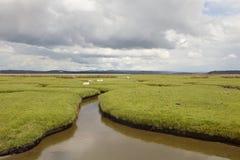 Salt Marsh Fields. Royalty Free Stock Image