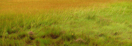 Salt Marsh Stock Photo