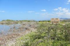 Salt Marsh on Island Royalty Free Stock Photos