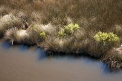 Salt marsh, North Carolina Stock Image