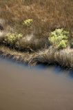 Salt marsh, North Carolina Royalty Free Stock Photos