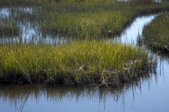 Salt marsh, North Carolina Royalty Free Stock Photo