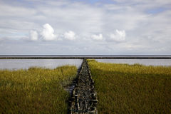 Salt Marsh on the North Sea Stock Photography