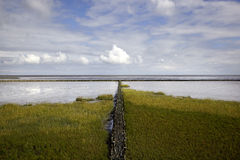 Salt Marsh on the North Sea Royalty Free Stock Photo