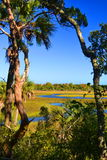Salt Marsh in Northeast Florida. The salt marsh through the trees Royalty Free Stock Images