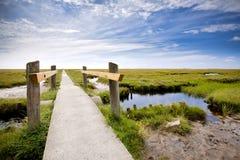 Salt Marsh på det Wadden havet arkivbilder