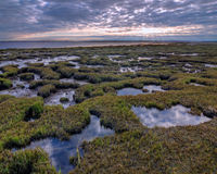 Salt Marsh Pools Royalty Free Stock Image