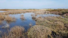 Salt marsh near Brindisi, Italy. Salt marsh in Punta Della Contessa near Brindisi, Italy royalty free stock photos