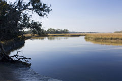 Salt marsh scenic Stock Image