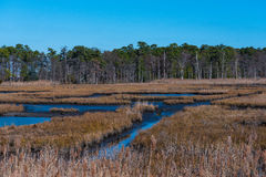 Salt Marsh and Treeline Stock Photo