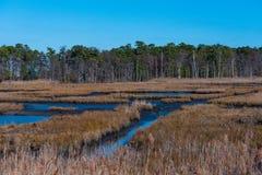Salt Marsh and Treeline. Salt Marshes with a visible treeline on a crisp Autumn day Stock Photo
