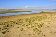 Salt Marsh Vegetation Royalty Free Stock Images