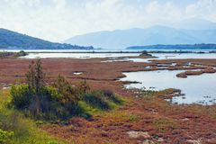 Salt marsh . View of special nature reserve Solila. Montenegro. Salt marsh . View of special nature reserve Solila - swamp area of the coastal part of the Bay of Royalty Free Stock Photos