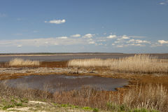 Salt Marsh Stock Image