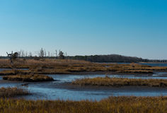 Salt Marshes Stock Image