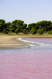 Salt marshes of Camargue in Aigues-Mortes Stock Images
