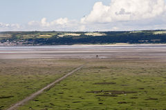 Salt Marshes, Gower Peninsular. A high vantage view over the salt marsh fields in the north of the Gower Peninsular showing the horses and sheep grazing beside stock photo