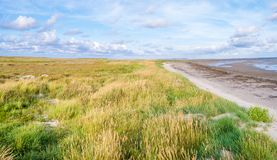 Salt marshes with sea lavender, dunes with sand couch and marram grass and tidal flats at low tide of Waddensea on Boschplaat, Te royalty free stock photography