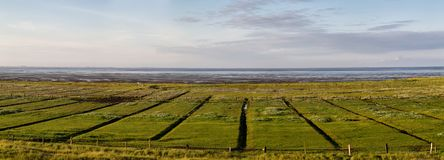 Salt marshes and wadden sea Royalty Free Stock Photo