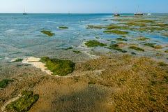 Salt marshes wetlands Royalty Free Stock Image