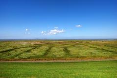 Salt meadows. Before blue sky Stock Photo