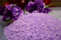 Salt och purpurfärgad tropisk blomma för lavendelhav Royaltyfria Bilder