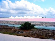 Salt Pan in Bonaire Royalty Free Stock Photography