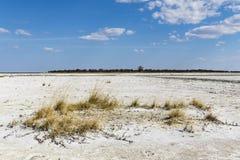 Salt pan in Nxai Pan National Park royalty free stock image