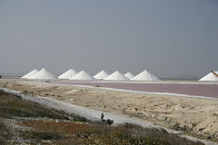 salt pannor Royaltyfri Bild