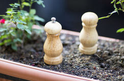 The salt and pepper. The salt and pepper stand in the flower bed Stock Images