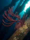 Salt Pier Pillar 02 Royalty Free Stock Images