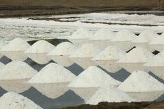 Salt plockning - Thailand Fotografering för Bildbyråer