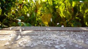 Salt is pouring down on wooden surface over nature background of summer, sunlight stock video