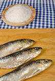 Salt preserved sardines Royalty Free Stock Photo