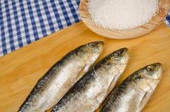Salt preserved sardines Royalty Free Stock Images